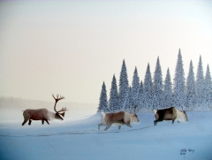 33-Caribou in Winter Morning