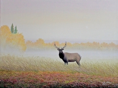 9-Elk in Fall
