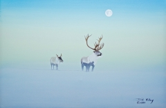 Caribou in Winter Morning