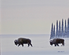 Buffalo's in Winter Morning